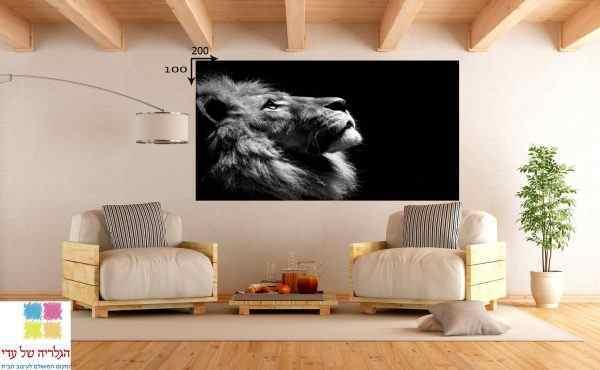 תמונה של אריה עם פנים למעלה שחור לבן
