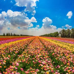 פרחים מרהיבים